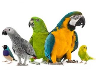 Pokarm dla ptaków egzotycznych
