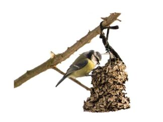 Pokarm dla ptaków zimujących
